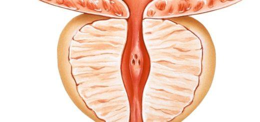 prostate-nornal