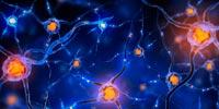 Восстановление периферической нервной системы